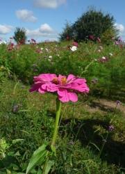 Des jardins et des espaces publics sans pesticides