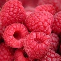 Distribution gratuite – Fruitiers et aromatiques